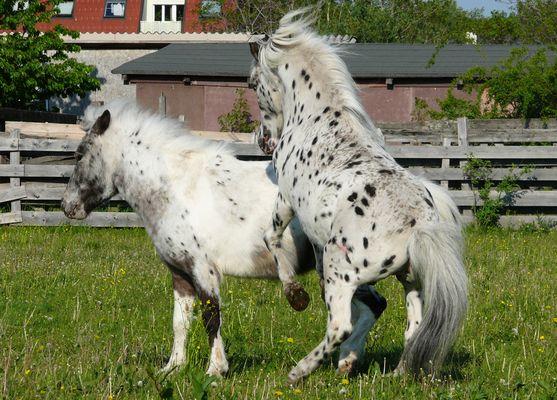 Princess Sparkle & Ariso von Brunn