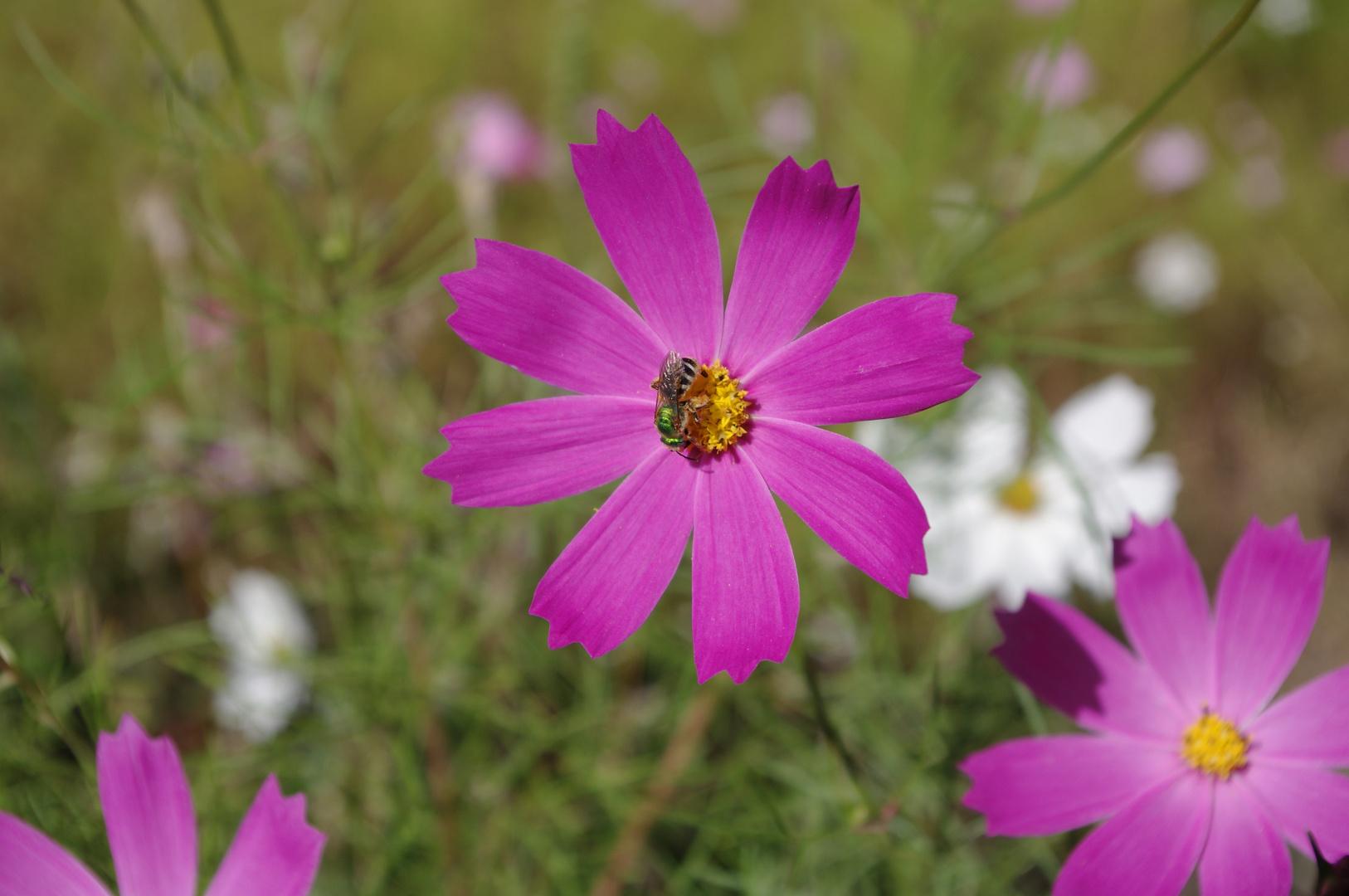 Princesse abeille