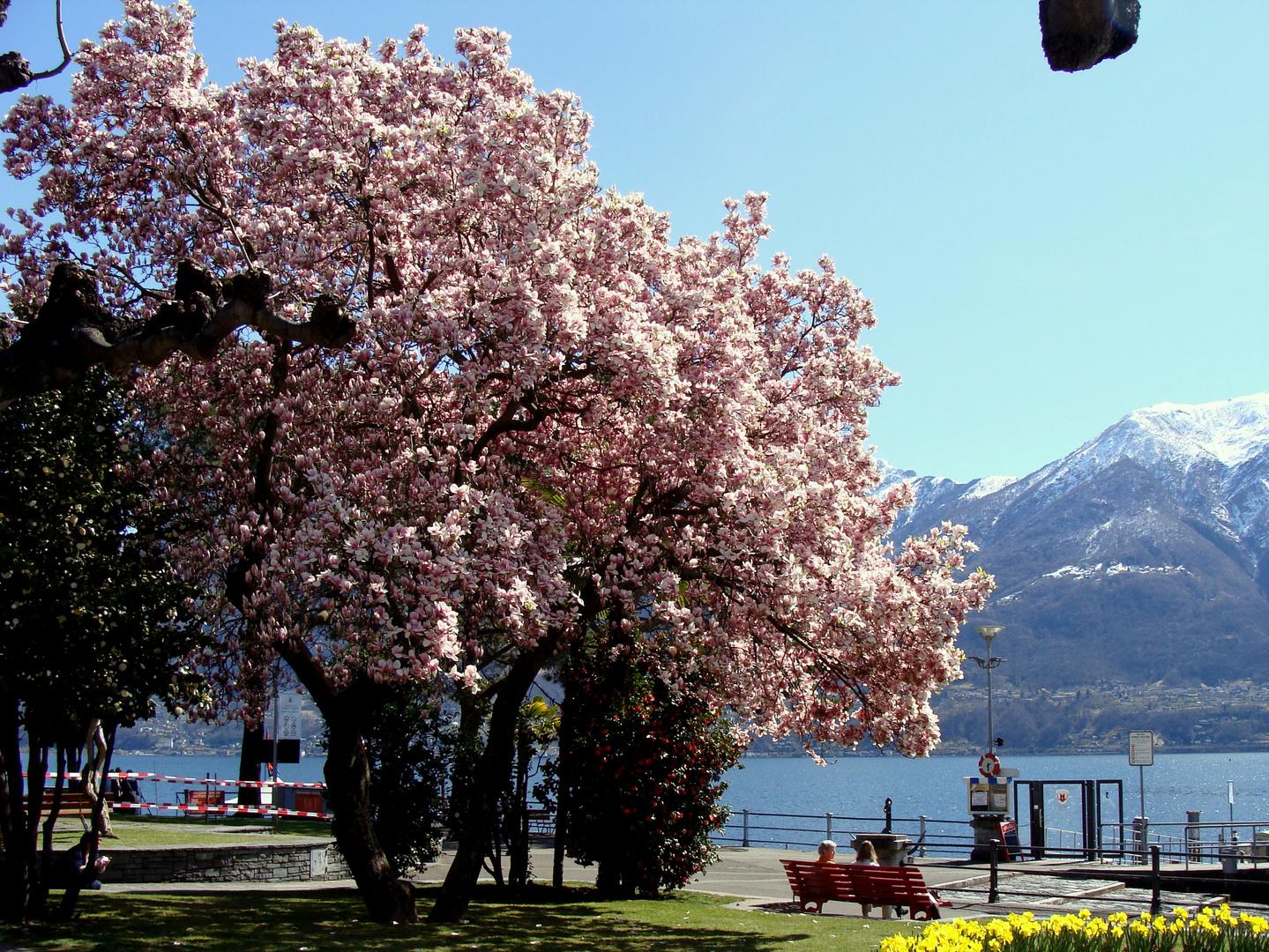 Printemps au / Primavera en / Frühling im = Tessin...09