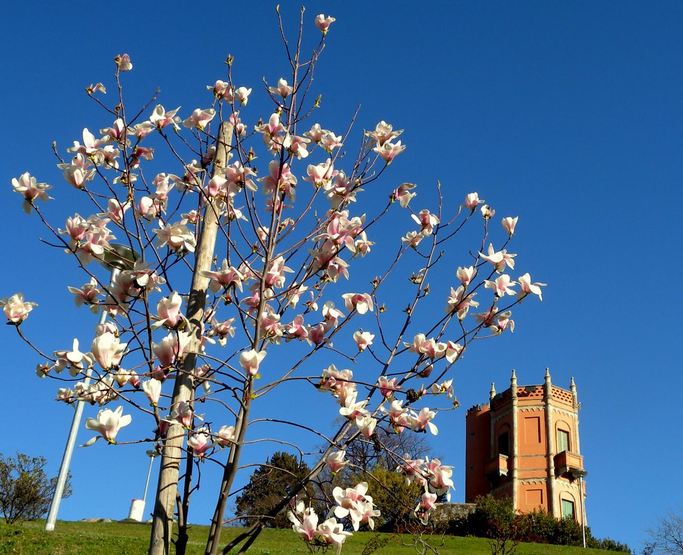 Printemps au / Primavera en / Frühling im = Tessin...12