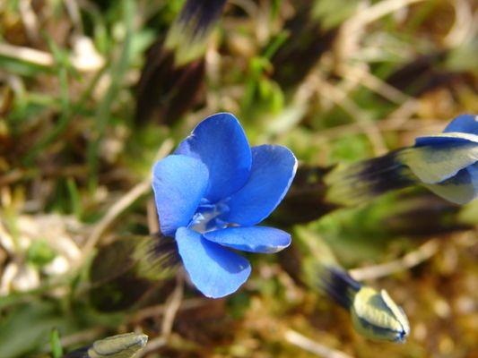 printemps bleu