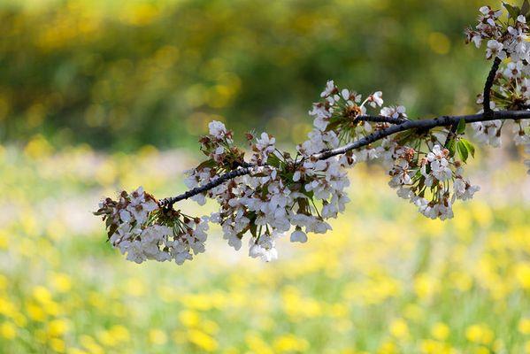 printemps en provence 2