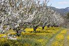 printemps en provence 3