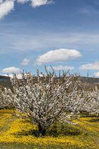 printemps en provence 4