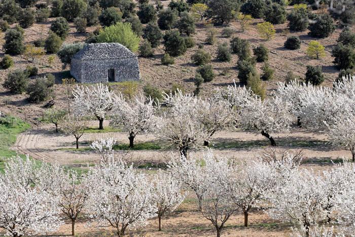 printemps en provence 5