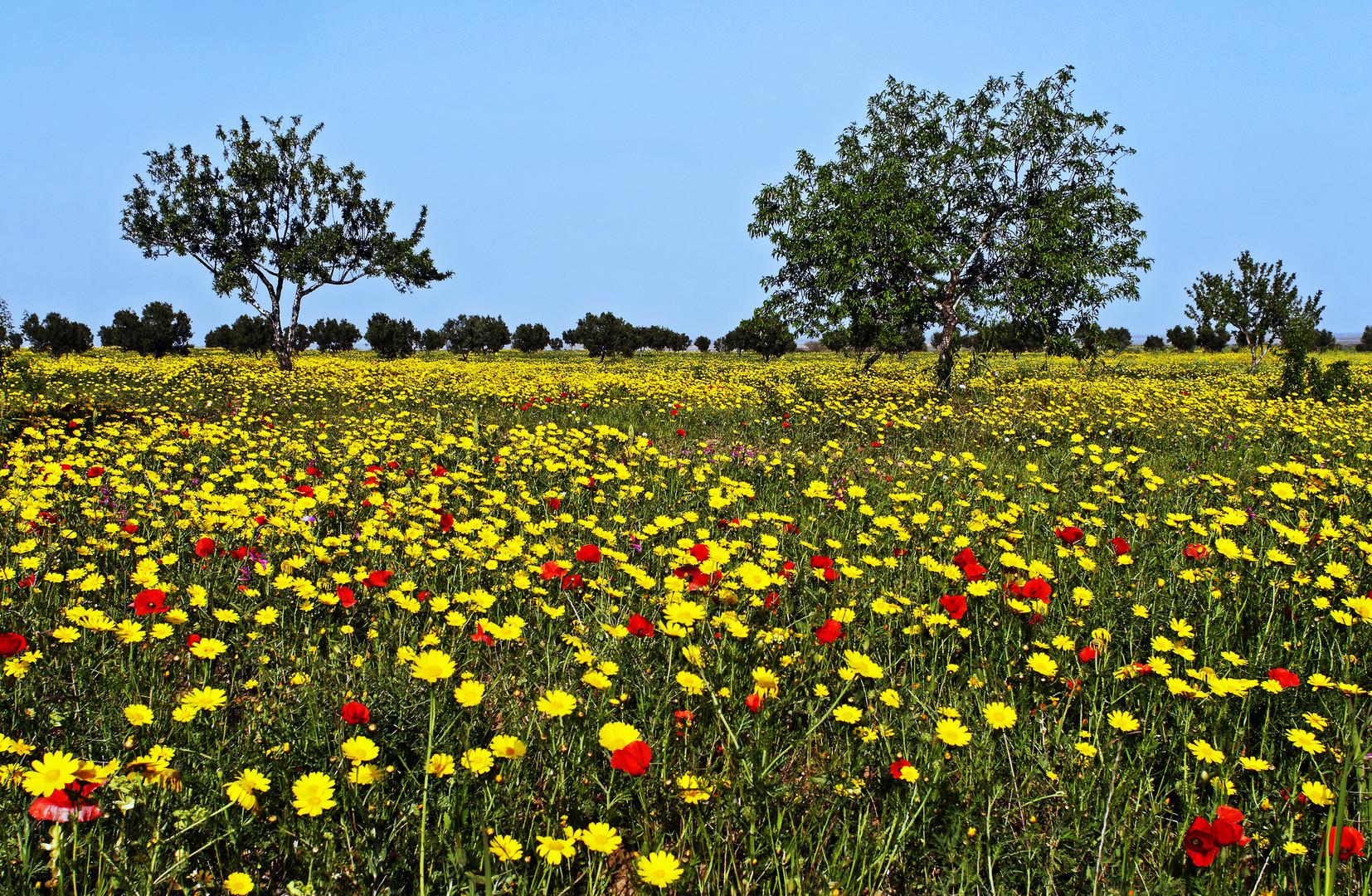 printemps en tunisie photo et image paysages paysages de campagne fleurs images fotocommunity. Black Bedroom Furniture Sets. Home Design Ideas