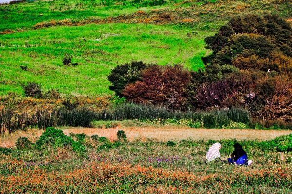 printemps marocain