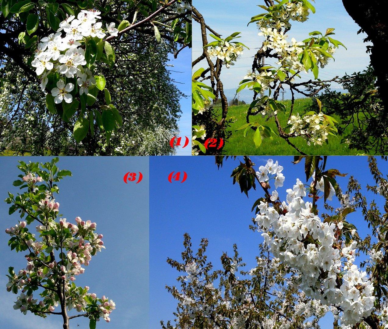 Printemps / Primavera / Frühling