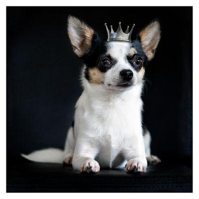 Prinzessin ...