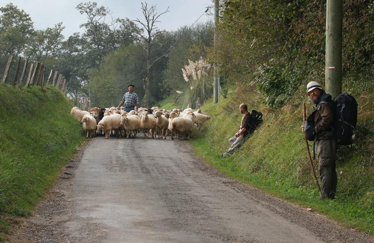 Priorité au Berger et son troupeau ....