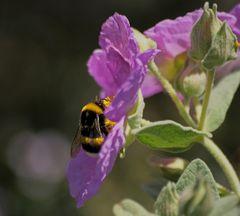 prise le nez dans le pollen....