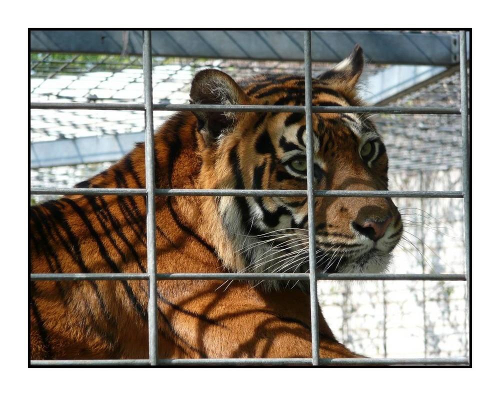 Prison pour animaux