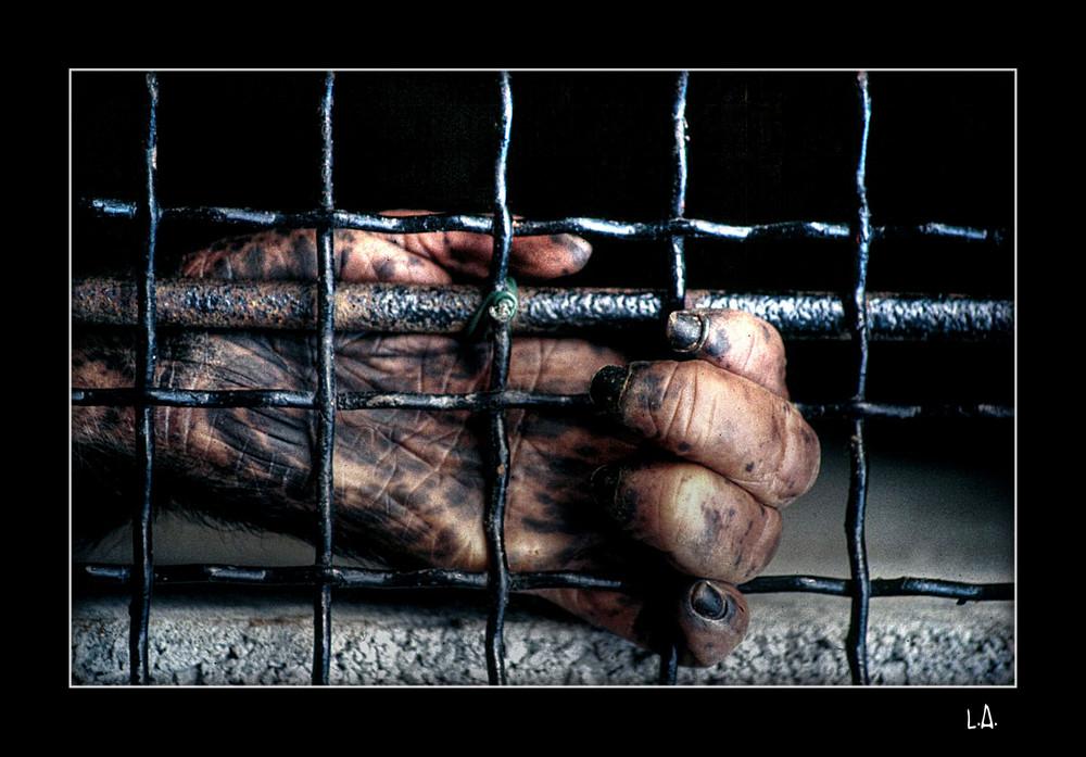 """"""" Prisoner """""""