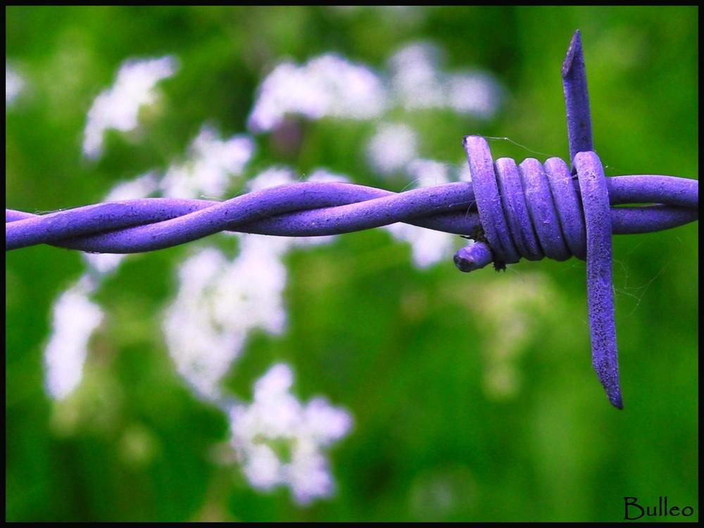 Prisoner Flower.