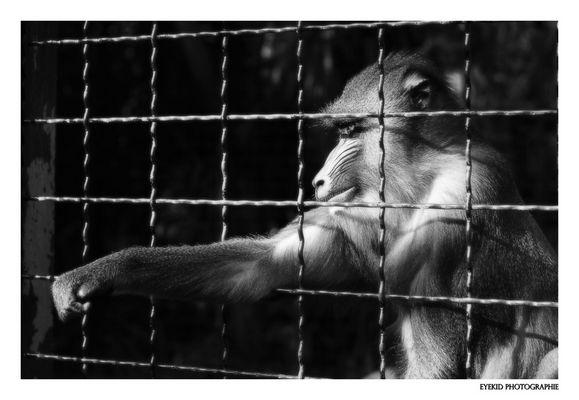 Prisonnier ...