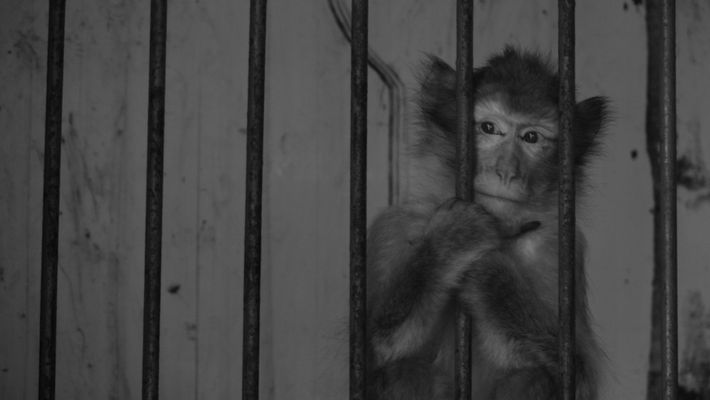 Prisonnier du cirque. 1