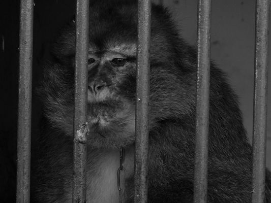 Prisonnier du cirque.