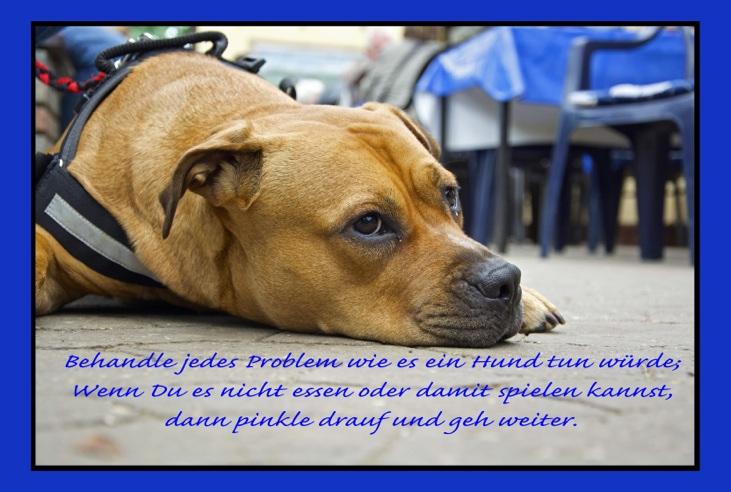 Problem - Hund