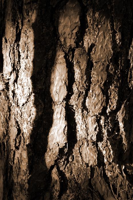 Profil eines Baumes