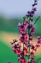 Profumi e colori di primavera................
