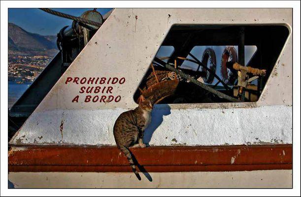 prohibido subir a bordo - betreten des schiffs verboten
