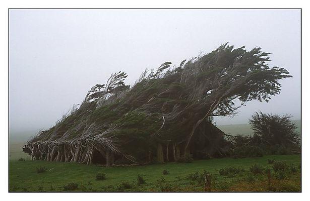 Projekt Mystik: Sturmgepeitschte Bäume am Slope Point