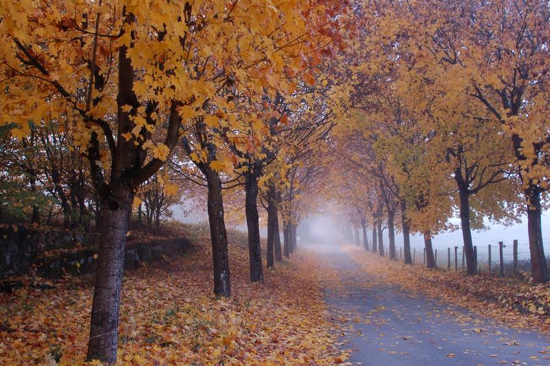 Promenade d automne !