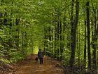 promenade dans le vert - Spaziergang ins Grüne