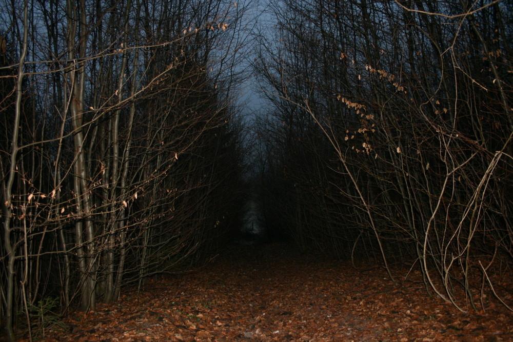 Promenade dans les sous-bois