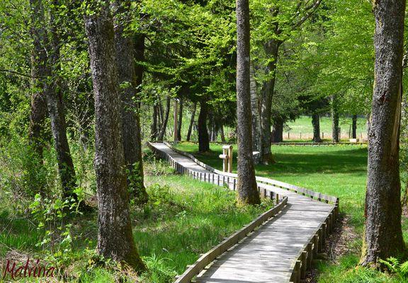 Promenade dans un parc régional