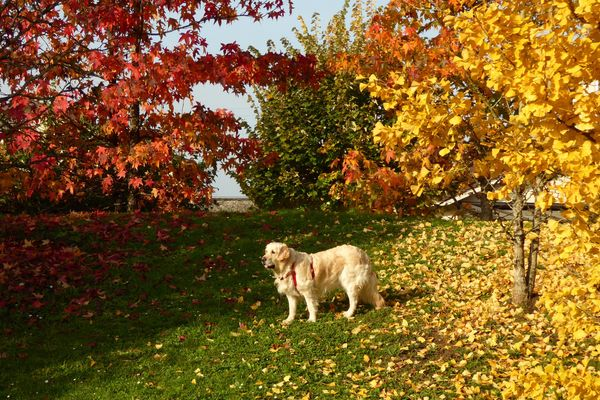 Promenade d'automne