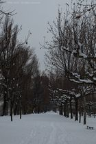 ...Promenade en Blanc...