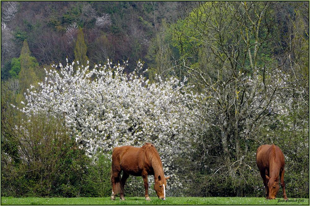 Promenade en deux chevaux