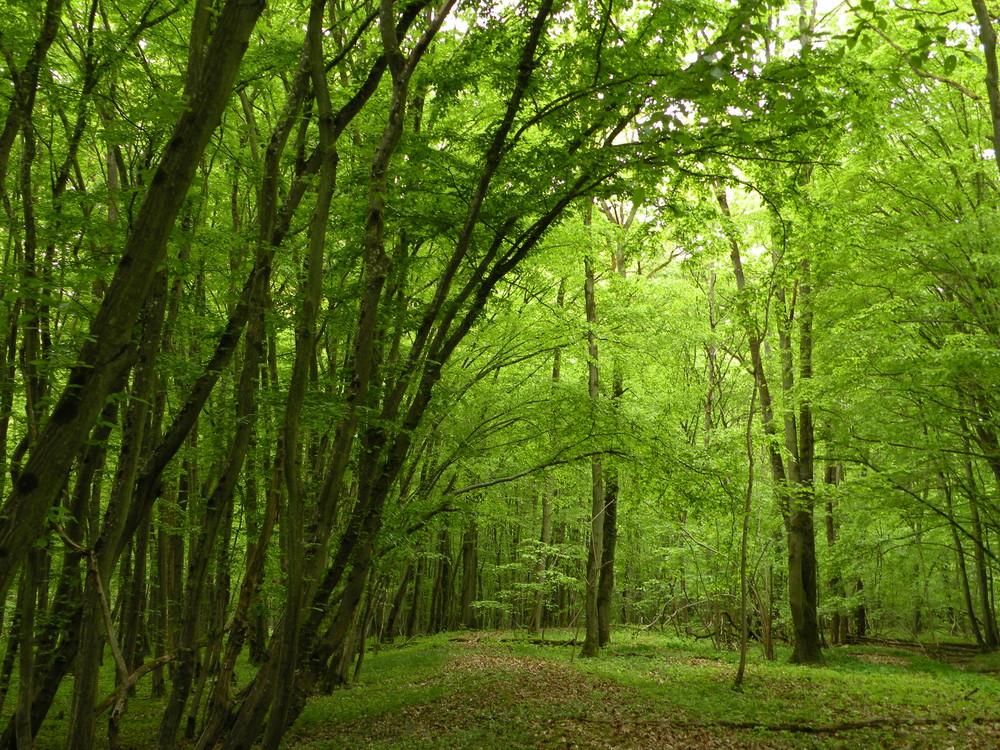 Promenade en forêt.