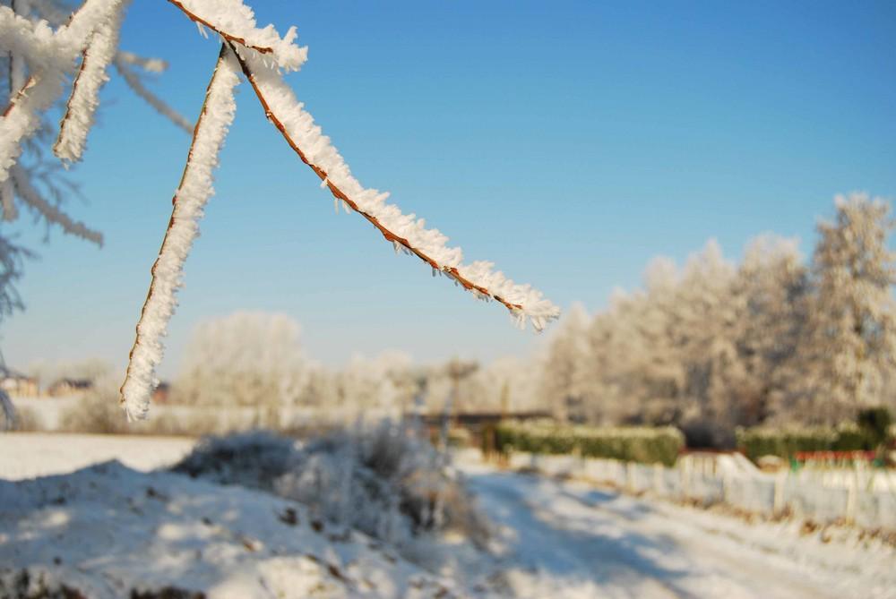 Promenade en hiver