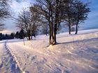 Promenade en raquettes à neige