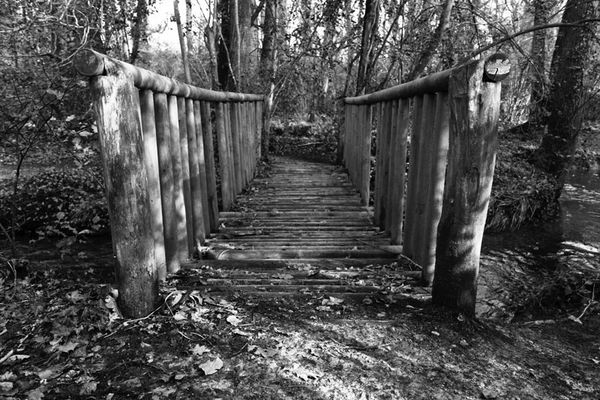 Promenade forêt 1