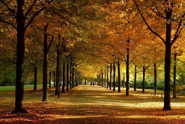 Promenade im Herbst / Farbenrausch