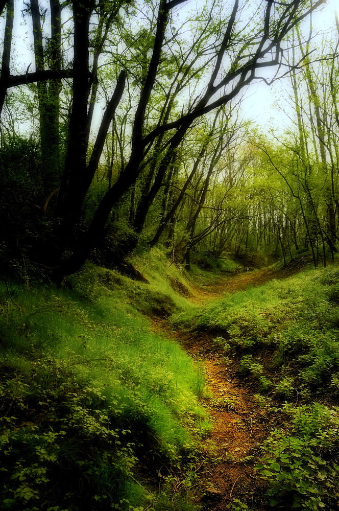 Promenade matinale dans les lônes du Rhône (3/3)