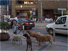 Promeneur de chiens  --  Andorre-la-Vieille