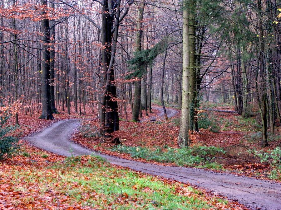Promenons nous dans le bois ...