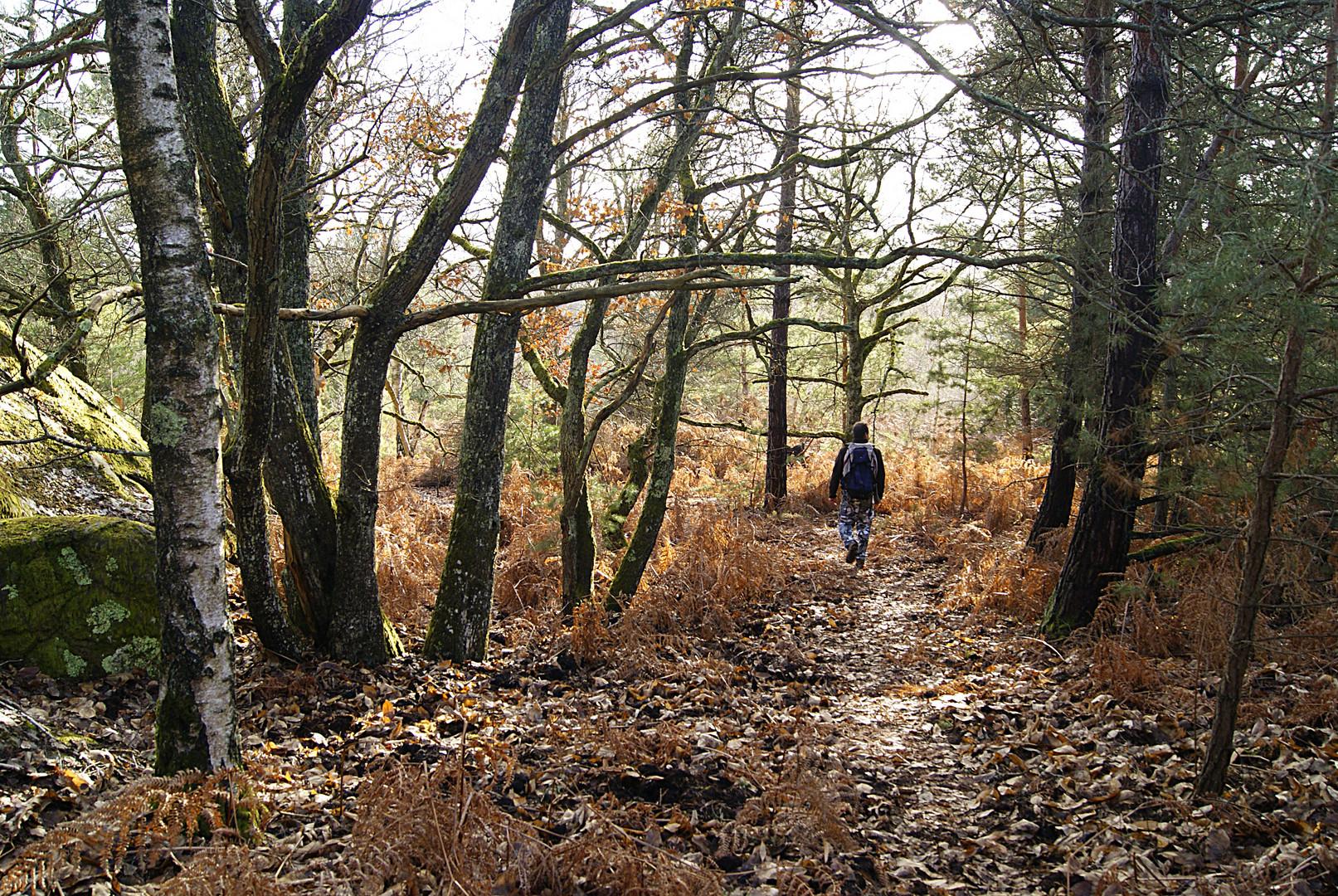 Promenons-nous dans les bois, pendant.....!!!!! Fontainebleau