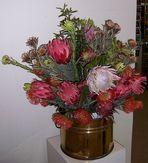 Protea, die Königin der Blumen