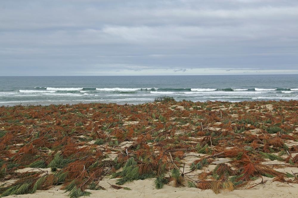 protection de la dune !!!