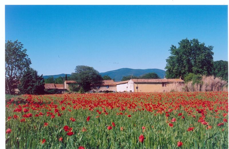 Provence & coquelicots
