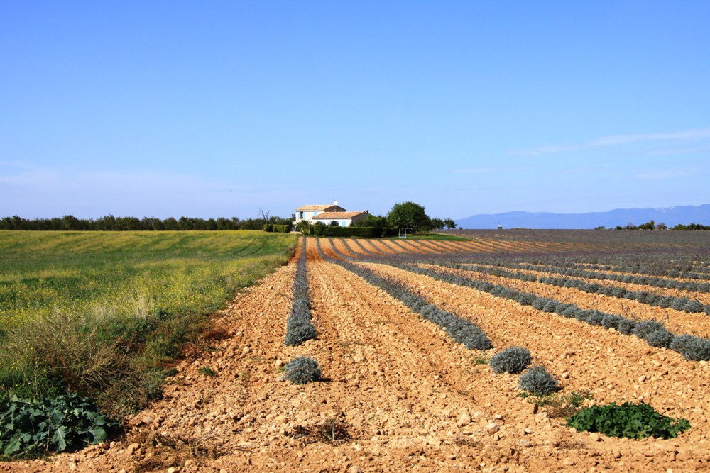 Provence - der Lavendel ist weg...
