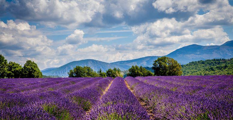 Provence en lavandes