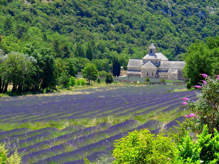 Provence, Kloster Senanque im Lavendelfeld