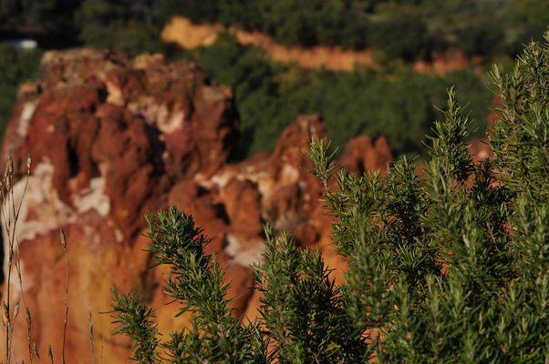 Provence Rosmarin an Ockerfels