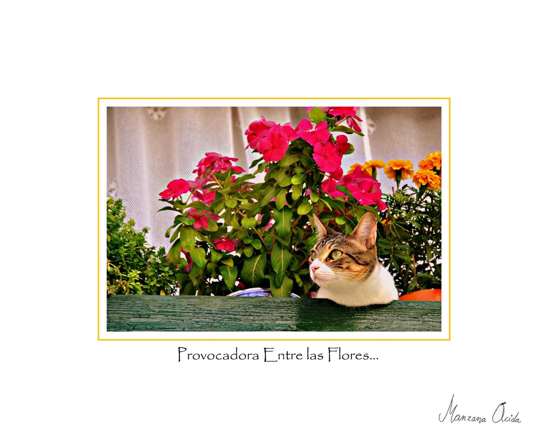 Provocadora Entre Las Flores...